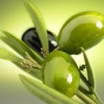 Akdeniz Zeytini